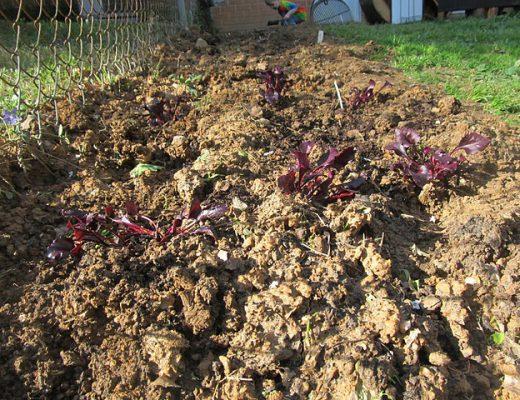 Garden-Sprouts.jpg