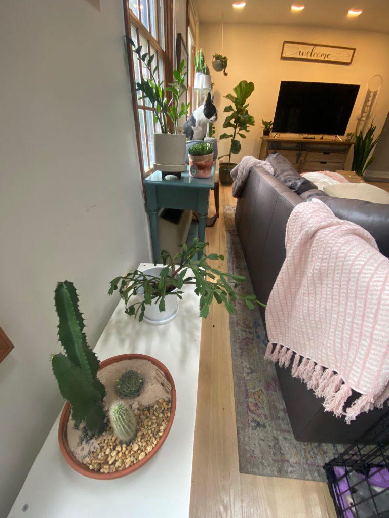 recovering plant killer sanderson sisters cactus trio