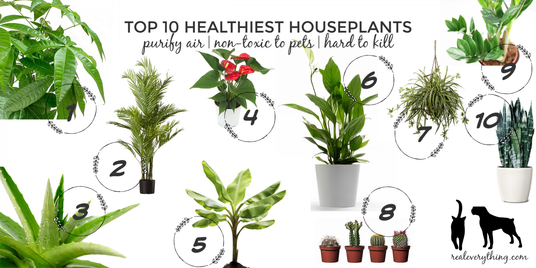 Top 10 Healthiest Houseplants Purify Air Non Toxic To Pets And Hard Kill