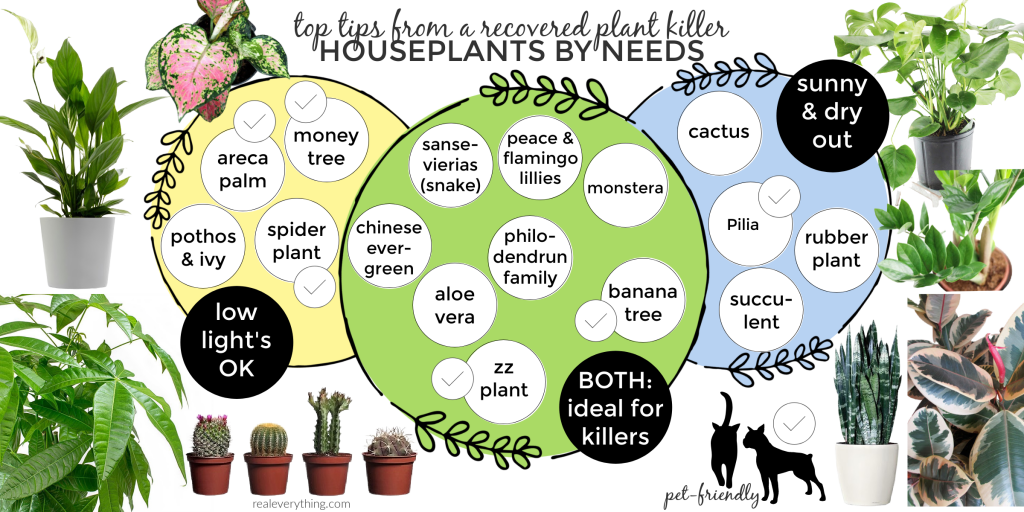 top tips from a recovering plant killer houseplant by needs