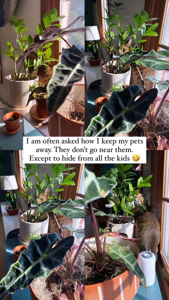 pet safety for a recovering plant killer