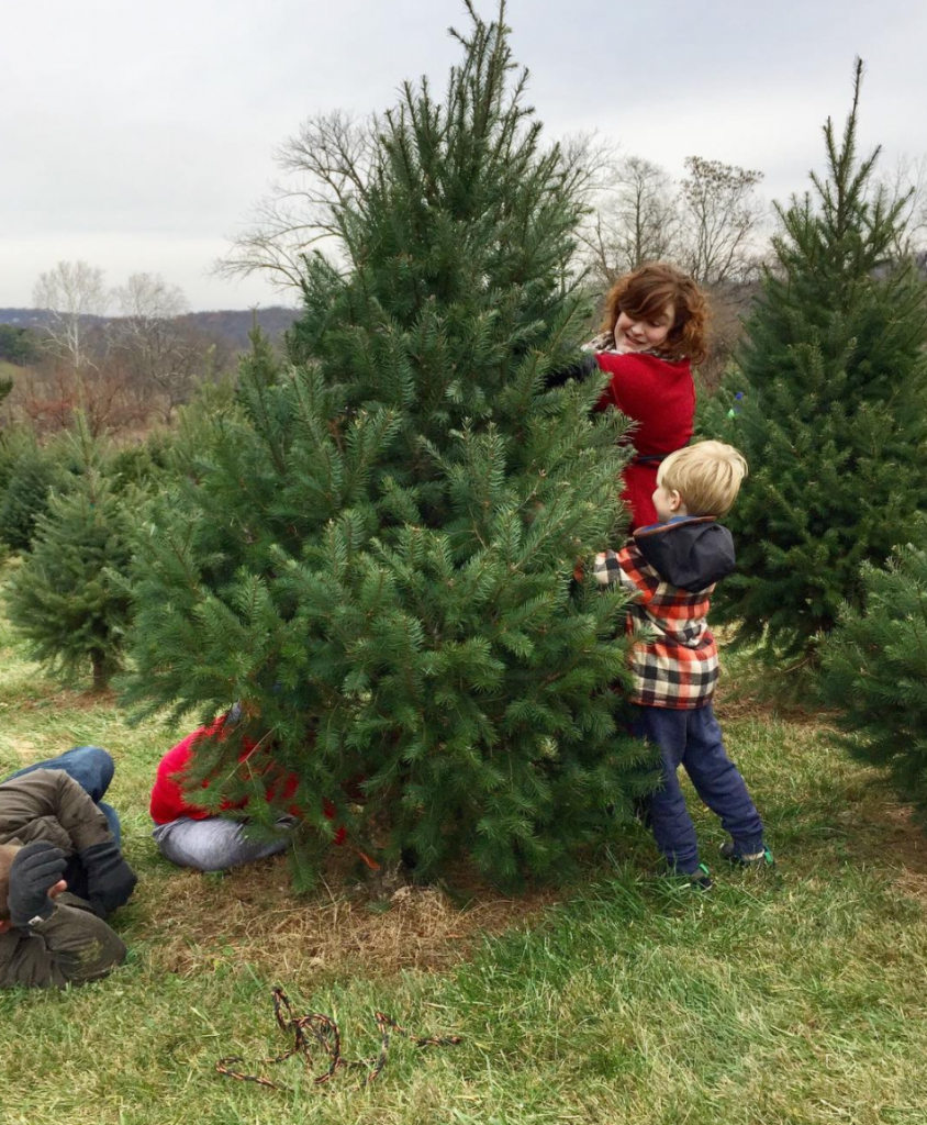 christmas tree cutting
